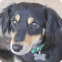 Adopt A Pet :: Rosita - Norwalk, CT