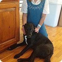 Adopt A Pet :: Zoey - Mishawaka, IN