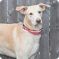 Adopt A Pet :: Charlie - Elmwood Park, NJ
