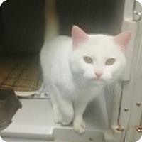 Adopt A Pet :: Bert - Byron Center, MI