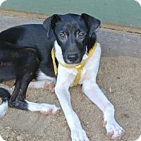 Adopt A Pet :: Hogan - Surrey, BC