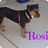 Adopt A Pet :: Rosie (Courtesy Listing) - Scottsdale, AZ