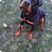 Adopt A Pet :: Tyson - Rexford, NY