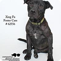 Adopt A Pet :: Xing Fu (Foster) - Baton Rouge, LA