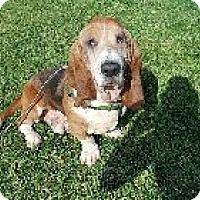 Adopt A Pet :: Grunt - Whittier, CA