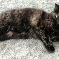 Adopt A Pet :: Callie - Fairborn, OH