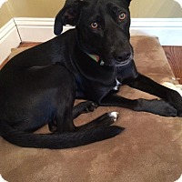 Adopt A Pet :: AMELIA (Courtesy List) - San Pedro, CA