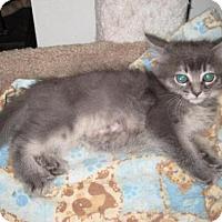 Adopt A Pet :: Char - Agoura Hills, CA