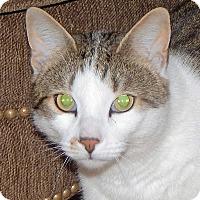 Adopt A Pet :: Toby - N. Billerica, MA