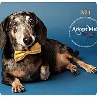Adopt A Pet :: Ivan - Weston, FL