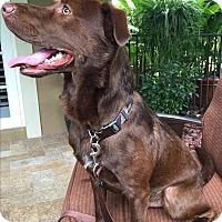 Adopt A Pet :: Jericho - Jupiter, FL