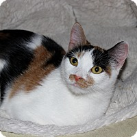 Adopt A Pet :: Abra - Fairfax, VA