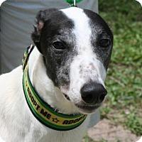 Adopt A Pet :: Rourke - West Palm Beach, FL