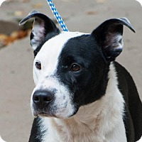 Border Collie Mix Dog for adoption in Versailles, Kentucky - Roscoe