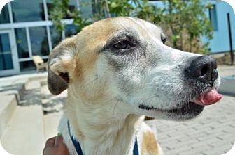 Labrador Retriever Mix Dog for adoption in New Orleans, Louisiana - Lala