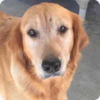Adopt A Pet :: Anna - Pacific, MO
