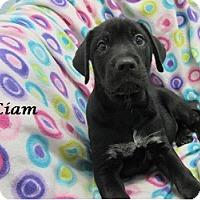 Adopt A Pet :: Liam - Bartonsville, PA