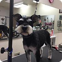 Adopt A Pet :: Mia - Denver, CO