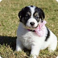 Adopt A Pet :: Jasmin - Aubrey, TX