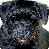 Adopt A Pet :: JANEY(OUR