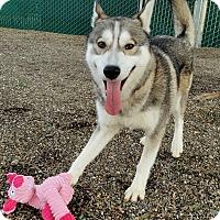 Adopt A Pet :: Lucky - Lompoc, CA