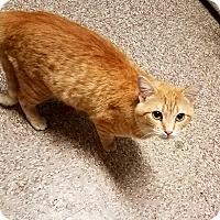 Adopt A Pet :: C-11 - Indianola, IA