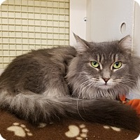 Adopt A Pet :: Polly - Warren, MI