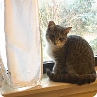 Adopt A Pet :: Susannah - Gainesville, FL
