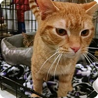 Adopt A Pet :: Marley - South Bend, IN