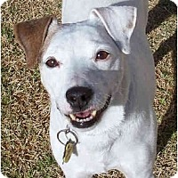 Adopt A Pet :: MAX - Phoenix, AZ