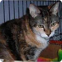 Adopt A Pet :: Daphne - Putnam Valley, NY