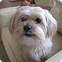 Adopt A Pet :: Sparky Adopted - Nine Mile Falls, WA