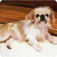 Adopt A Pet :: Simonette - Mooy, AL