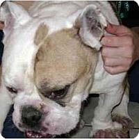 Adopt A Pet :: Stone - Winder, GA