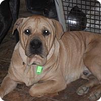 Adopt A Pet :: Clayton - Newport, VT
