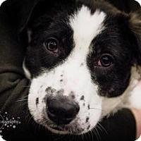 Adopt A Pet :: Rupert - Minneapolis, MN