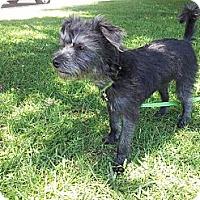 Adopt A Pet :: Milo - Huntington Beach, CA