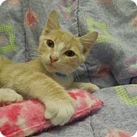 Adopt A Pet :: Kiwi - Medina, OH