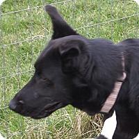 Adopt A Pet :: Ivory - Prole, IA