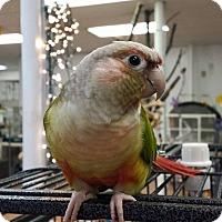 Adopt A Pet :: Frankie - Villa Park, IL