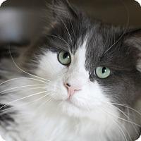 Adopt A Pet :: Idris - Chicago, IL