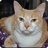 Adopt A Pet :: Lou Lou - marine, MI