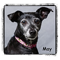 Adopt A Pet :: May - Warren, PA