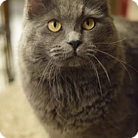 Adopt A Pet :: Chewy - DFW Metroplex, TX