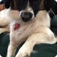 Adopt A Pet :: Koa - Oakley, CA