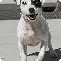 Adopt A Pet :: Betty - Las Vegas, NV