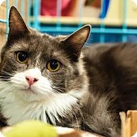Adopt A Pet :: Spatzle - Gainesville, FL
