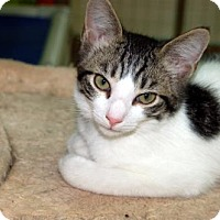 Adopt A Pet :: Kitten ID# 1762 - Lake City, MI