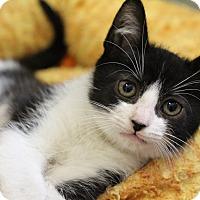 Adopt A Pet :: Marty - Sarasota, FL