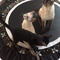 Adopt A Pet :: Mimi - Philadelphia, PA